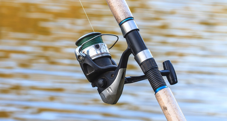 How to Choose the Best Catfish Rod for the Money
